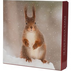 Photographic Wildlife Christmas Deluxe Box of 12 Assorted Matt Finish Xmas Cards by Ling Design