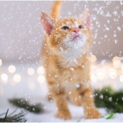 Kitten in Snow Photo Finish Xmas Charity Christmas Cards Pack (6 Cards,1 Design)