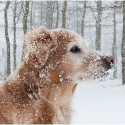 Dog in Snow Photo Finish Xmas Charity Christmas Cards Pack (6 Cards,1 Design)