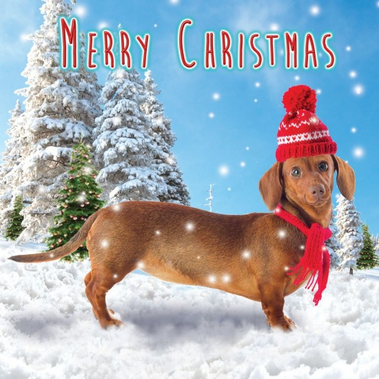 Dachshund Sausage Dog in Bobble Hat Snow Flitter Single Luxury Christmas & New Year Card