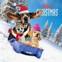 Dogs With Animal Friends on Toboggan Xmas Gloss Finish Charity Christmas Cards 5 Pack