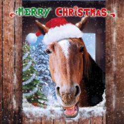 Happy Horse with Santa Hat in Stable Xmas Marie Curie Christmas 5 Card Pack