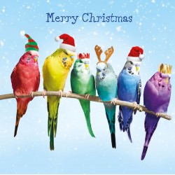 Festive Budgies on Branch Magic Xmas Charity Christmas Cards Pack (5 Cards,1 Design)