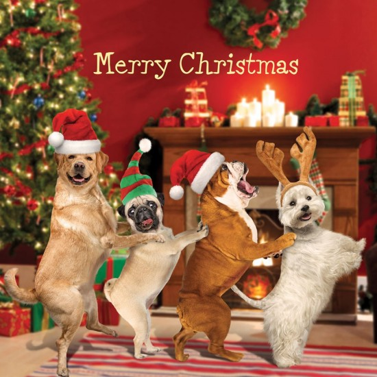 Festive Conga Dancing Dogs Xmas Magic Single Christmas and New Year Greeting Card