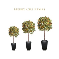 Three Holly and Berry Trees in Pots Foil Finish Single Christmas and New Year Greeting Card