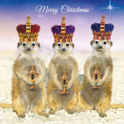 Gogglies Three Kings Xmas Meerkats Single Christmas and New Year Greeting Card
