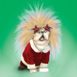 Rock Star Dog in Elton Glasses & Santa Costume Single Gloss Finish Xmas Christmas Card