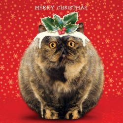 Funny Cute Fat Cat Pudding Gloss Finish Large Single Christmas Xmas Card