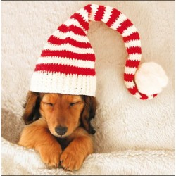 Christmas Dreams Puppy Dog Sleeping in Knit Hat Pack of 5 Charity Christmas Greeting Cards of 1 Design