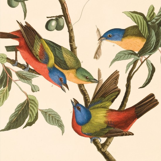 Birds of America Blank Notecard Pack by Fitzwilliam Museum (2 each of 5 designs)