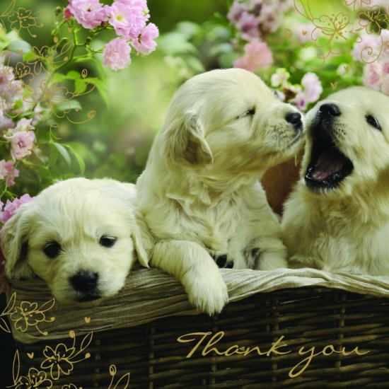 Puppies in Basket Thank You Notecards Luxury Foil finish Pack of 5 Cards and Envelopes