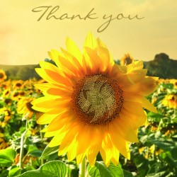 Field of Sunflowers Thank You BLANK Notecards Luxury Foil finish Pack of 5 Cards and Envelopes