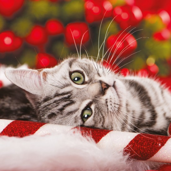 Candy Cane Kitten Beautiful Cat Photo Finish Xmas Charity Christmas Cards Pack (6 Cards,1 Design)