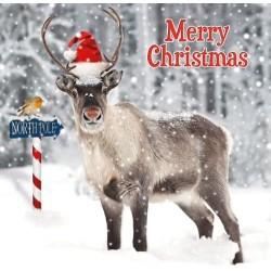 Reindeer in Santa Hat at North Pole Large Gloss Finish Xmas Single Christmas Card