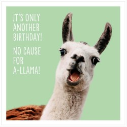 its only another Birthday! no cause for A-Llama Funny Greeting Card