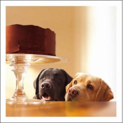 Labrador Dogs Cake - Blank Greeting Card - Lewie & Clark Forbidden Treasure From Loose Leashes