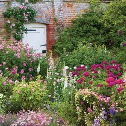 National Trust Mottisfont Walled Rose Garden Blank Greeting Card - Woodmansterne