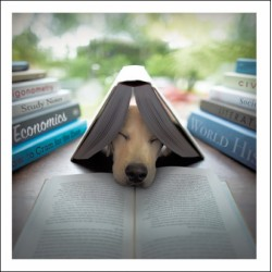 Labrador Dog Book Exam Study - Blank Greeting Card - Edison The Scholar From Loose Leashes