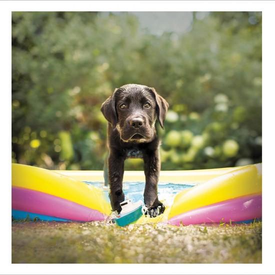 Labrador Retriever- Minnow - The Sun Bum - Blank Greeting Card - From Loose Leashes