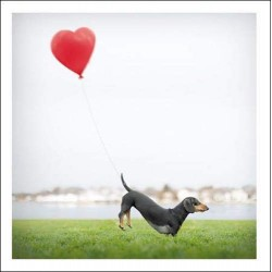 Romeo The Romantic Dachshund - Blank Greeting Card - From Loose Leashes