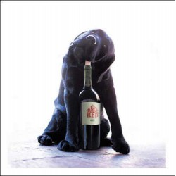 Hooch The Red Wine Reveller Labrador - Blank Greeting Card - From Loose Leashes