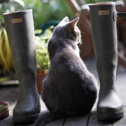 Cat sitting in between Wellington Boots BBC Countryfile Range Blank Greeting Card