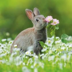 European Rabbit BBC Springwatch Range Blank Greeting Card